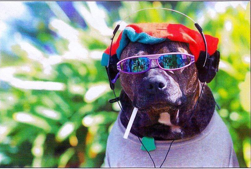 hund_bunte-muetze