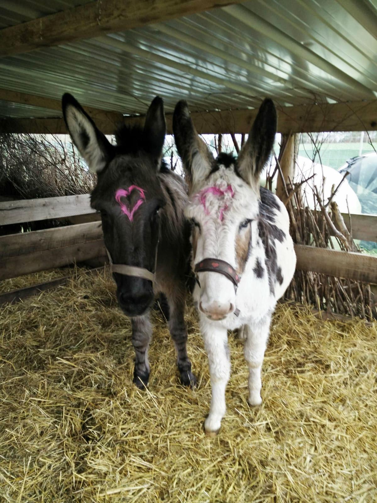 Esel Lucy und Tilly Dezember 2018